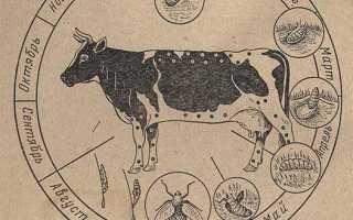 Гиподерматоз крупного рогатого скота — Морфология и биология возбудителя, патогенез, диагностика, лечение и профилактика
