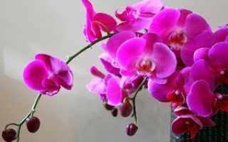 Как заставить цвести орхидею: признаки и как начинает цвести фаленопсис дома
