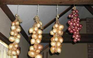 Как хранить лук зимой правильно? Хранение репчатого лука в квартире
