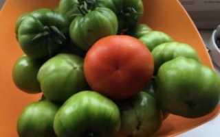 Как вырастить помидоры «Санька»: советы агрономов
