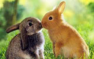 Интересные факты о кроликах — об уходе, разведении и содержании