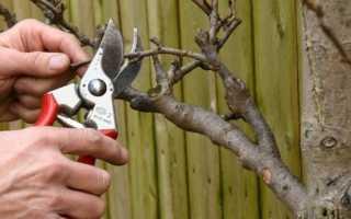 Обрезка плодовых деревьев весной — правила и принципы обрезки, ошибки