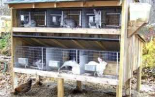 Клетки для кроликов: типы клеток, особенности изготовления