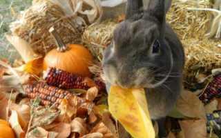 Можно ли давать кроликам тыкву? Особенности питания и рекомендации