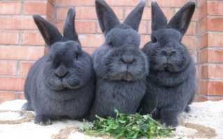 Породы кроликов: обзор видов, фото и описание