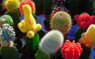 44 лучших вида кактусов: домашние, комнатные, какие бывают