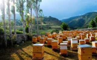 Всё о перевозке пчёл