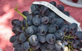 Виноград сорта Фурор: описание сорта, преимущества и недостатки