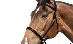 Хакамора: все «за» и «против» её использования для лошади