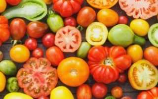 Самые лучшие сорта томатов для Ленинградской области
