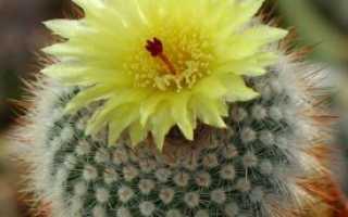 Волшебные свойства кактуса