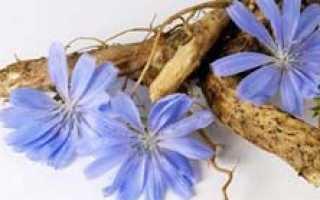 Цикорий растворимый: противопоказания, полезные свойства, польза и вред, Азбука здоровья