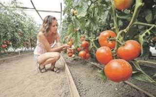Томат Золотое сердце: характеристика и описание сорта, урожайность с фото