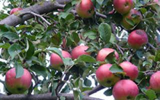 3 ошибки при планировке плодового сада — ЮЖНЫЙ ОГОРОД