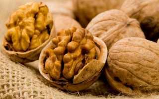 Польза и вред грецких орехов, использование в медицине и косметологии