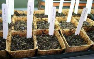 Стратификация — что такое? Стратификация семян в холодильнике