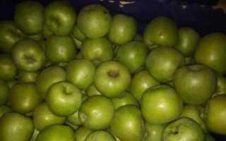 Сорта яблонь для средней полосы – медовое солнечное чудо
