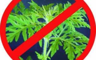 Как избавиться от сорняков народными средствами с помощью уксуса