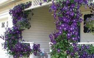 Садовые вьюны многолетники: фото и названия плетущихся растений для сада, вьющиеся многолетние кустарники и цветы