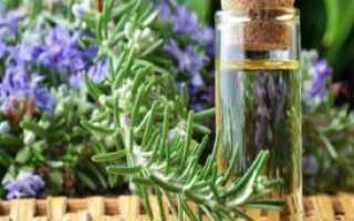 Розмарин: лечебные свойства и противопоказания, применение эфирного масла, Азбука здоровья
