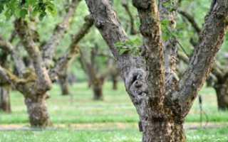 Болезни деревьев: фото и названия