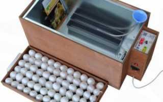 Инкубатор Блиц: описание, характеристики, как пользоваться