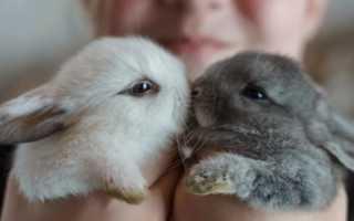 У кролика слезятся глаза: в чем причина, что делать