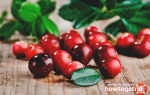 Брусника — польза и вред для здоровья организма