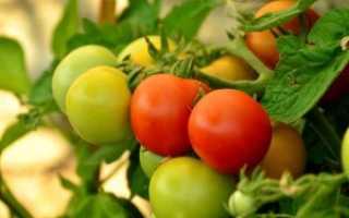 Томат — Дубрава — (Дубок): характеристика, выращивание и описание сорта