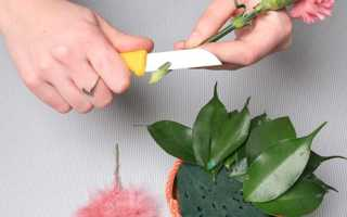 Как называется губка для цветочных композиций, что такое флористическая пена