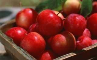 Описание сортов яблок для Ленинградской области