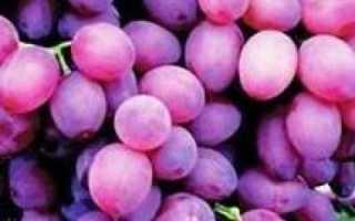 Виноград Муромец – описание и характеристика