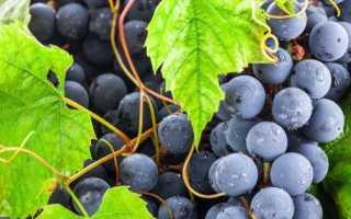 Когда подкормить виноград осенью: когда время вносить удобрения