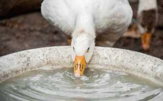 Поилка для гусей своими руками: пошаговая инструкция