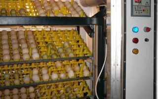 Как выбрать качественный бытовой инкубатор