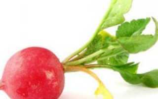 Почему редис горчит, не завязывается, не растет, или проблемы при выращивании редиса