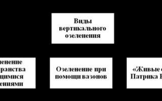 Вертикальное озеленение: понятие, преимущества, функции, Виды вертикального озеленения — Индивидуальный проект вертикального озеленения территории дачного участка Республики Башкортостан, г