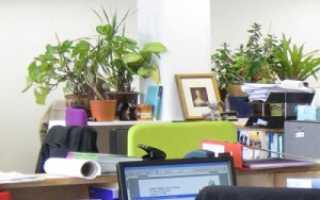 Цветы для офиса (неприхотливые): фото и название: как выбрать подходящие
