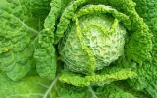 Уникальный овощ – капуста савойская