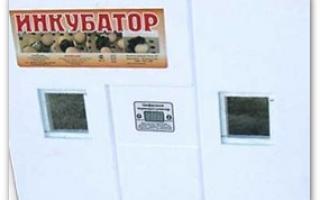 Инкубатор «Птичка»: как пользоваться инкубатором Птичка 100Р, Фермерское птицеводство
