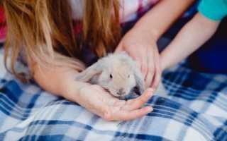 Болезни декоративных кроликов: симптомы и лечение