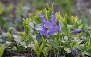 Самые интересные вечнозелёные растения для сада