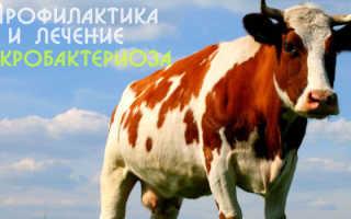 Некробактериоз крупного рогатого скота: признаки, лечение