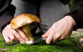 Съедобные грибы Саратовской области: описание, особенности и отзывы