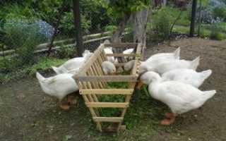 Самодельная кормушка для гусей своими руками для травы и сена