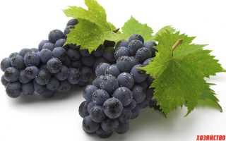 7 лучших черных сортов винограда