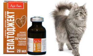 Гепатоджект для кошек: инструкция по применению, отзывы