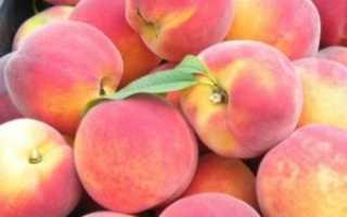 Правильная обрезка персика весной