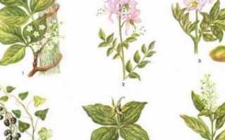 Виды опасных ядовитых растений, описание, названия, фото