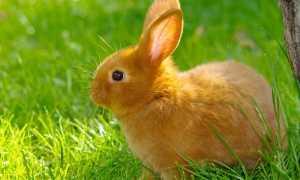 Почему у кролика кал: со слизью, чёрный, мягкий, жидкий
